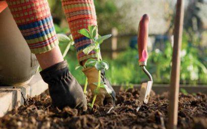 servizi di giardinaggio Padova